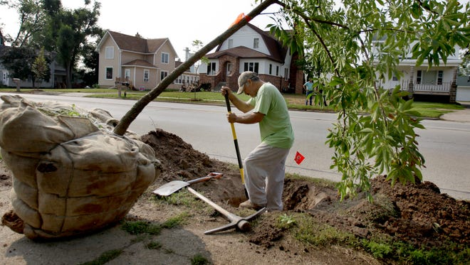 Juan Rosis, of Wolfrath's Landscaping, digs a hole for a a young tree on Main Street on Friday in Hortonville. The tree is one of dozens that are replacing those destroyed a year ago when a tornado touched down in the village.