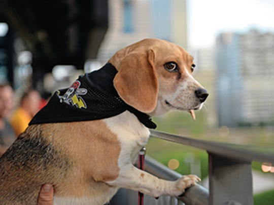 """The Pittsburgh Pirates' PNC Park hosts """"Pup Nights"""""""