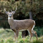 Chronic wasting disease found in Guernsey County deer