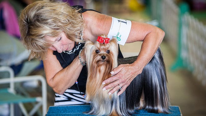 Competitors and their dogs face off during the Dog Show at the Delaware County Fairgrounds Thursday.
