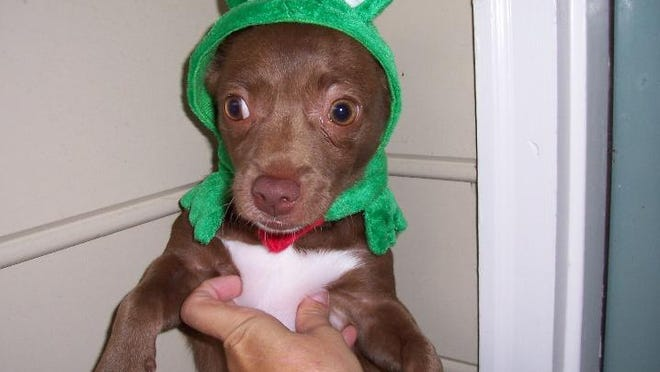 Fang hated her Frog costume. It didn't last long.