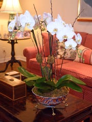 Orchids are always a lovely addition to a living room.