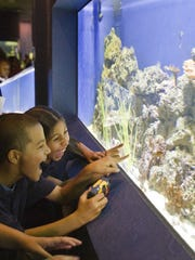 Wildlife World Zoo has a four-building aquarium filled with hundreds of fish, amphibians and more. The zoo boasts that theSouth Pacific Reef tunnel tank is the longest acrylic tunnel in Arizona.