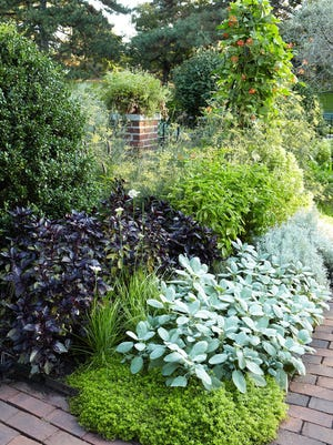 Herbs that grow best in a small or water-wise garden include basil, oregano, parsley, thyme and rosemary.