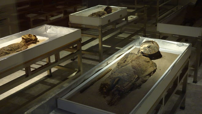 Chinchorro mummies dating as far back as 5000 B.C. are displayed at the University of Tarapaca's San Miguel de Azapa museum in Arica, Chile. They were named after the nearby beach district where they were found.