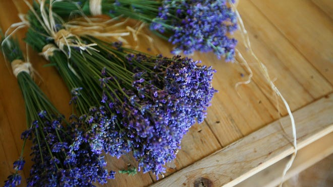 Start collecting flowers for drying. Pick them in late morning after the dew has thoroughly dried.