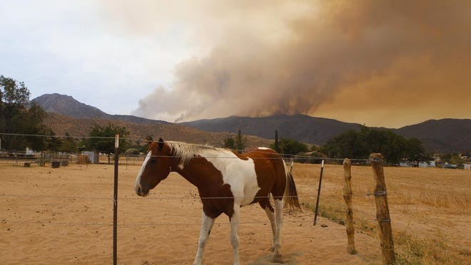 A stabled horse with the Erskine fire burning in the the distance on Saturday, June 25, 2016, in Weldon, Calif.