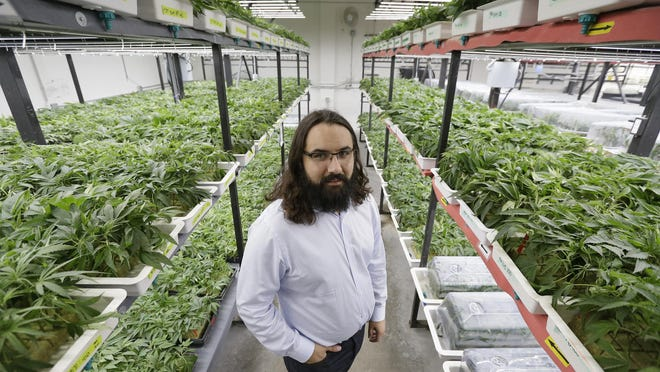 In this May 3, 2017, photo, Dan Grace poses for a photo in the marijuana production facility of the Dark Heart Nursery in Oakland, Calif. The City of Oakland is prodding cannabis businesses to pair with minority applicants if they want a license to sell, manufacture, cultivate or distribute weed in 2018 as part of California's massive expansion of legal cannabis. (AP Photo/Eric Risberg)