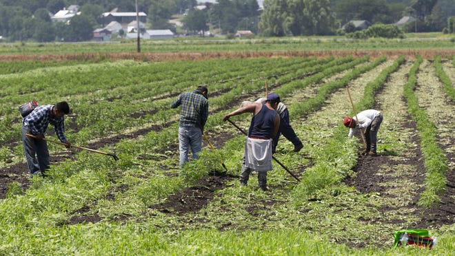 Hudson Valley fruit and vegetable growers aren't sure whether they will have sufficient labor this year due to restrictions on processing visas in Mexico in an effort to contain the spread of the coronavirus.