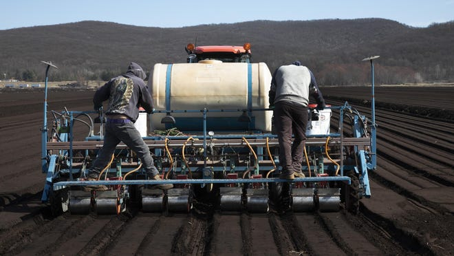 The new farm labor law, which took effect Jan. 1, requires farmers to pay their workers time-and-a-half after 60 hours.