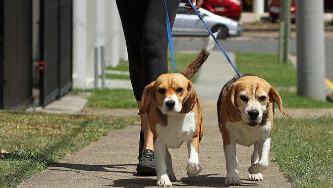 Always have your dog on a leash when going for a walk.