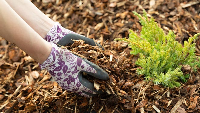 A mix of grass clippings, leaves and compost will give your soil and plants a nutrient boost.