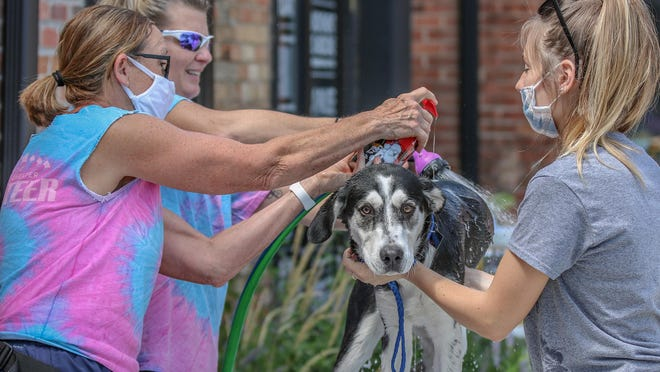 From left, volunteers Mary Lou Rupp, Heidi McCready and Addy Riffel give Kodi a bath during the Dog Wash Benefit sponsored by Friends of Salina Animal Shelter & A Work in Progress Yoga Studio in the parking lot of the yoga studio, 218 E. Walnut Street, in Salina on Saturday.