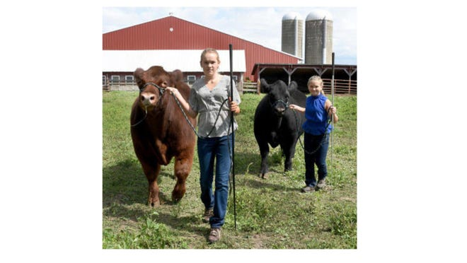 Zoe Stanger, 13, and her sister Sophie, 11, of Dundee take their steers named Chile and Soloman for a walk prior to taking part in the Monroe County 4-H virtual show that took place in August.