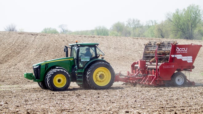 This 2014 file photo shows a 13-acre pilot field of giant miscanthus is planted just south of Iowa City. Building off the success the UI had with cultivating and burning oat hulls for its power plant in which started in 2003, miscanthus is the next step the University of Iowa has taken in finding renewable sources of energy to burn in order to provide energy to the campus.
