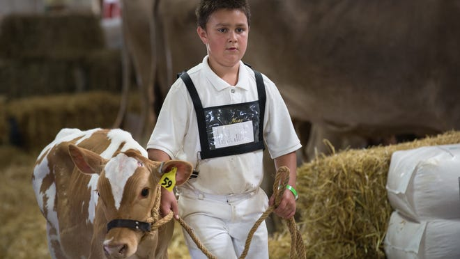 Kyle Domke returns with his calf after his showing to the judges. The 2014 Winnebago County Fair is from August 5-10 at the Sunnyview Expo Center.
