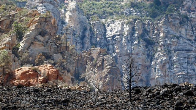 Oak Creek Canyon waters contaminated by ash and debris from this summer's Slide Fire can impact fish breeding areas and places that narrow-headed garter snakes hide to hunt the fish.