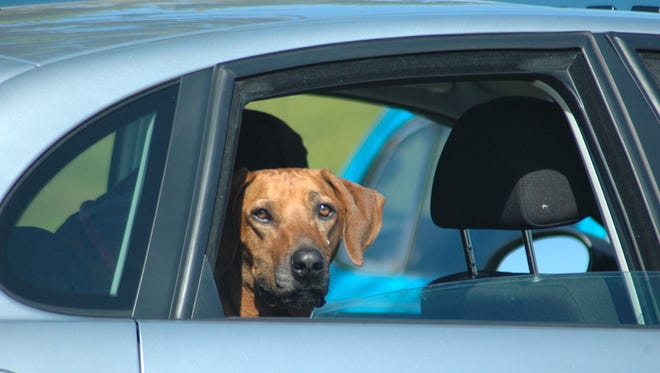 If you have a highly active dog, the goal should be to have him relaxed while riding in the car -- a calm and relaxed dog is a quiet dog.