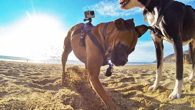 Create your own YouTube sensation by attaching GoPro cameras to your dog as he or she goes about their daily antics. Cameras can be mounted to the chest or back.
