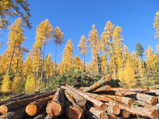 -2013 kspell timber tour--plum creek_stoltze 015.jpg_20150410.jpg