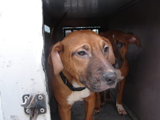 Jackson Police seek the identity of these dogs found Monday in Jackson.