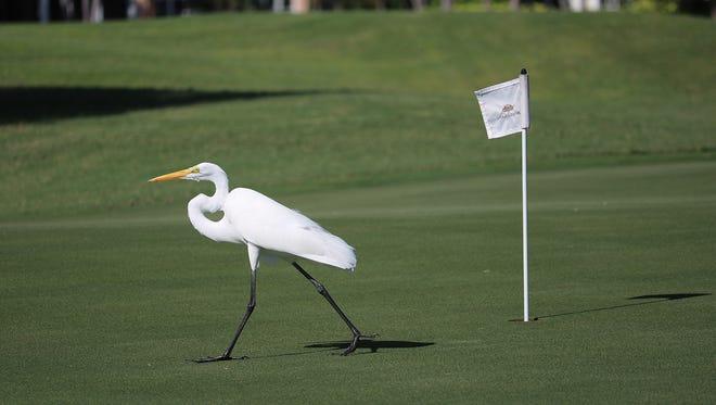 Orchid Island Golf & Beach Club has been a Certified Audubon Sanctuary since 2005.