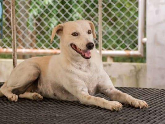 Bridget at Soi Dog Foundation
