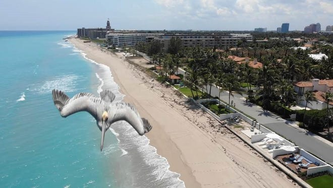 A pelican flies next to a Palm Beach Police Department Drone while it patrolled Midtown Beach last week. The photo prompted questions from readers whether police using a drone to patrol the beach was legal.