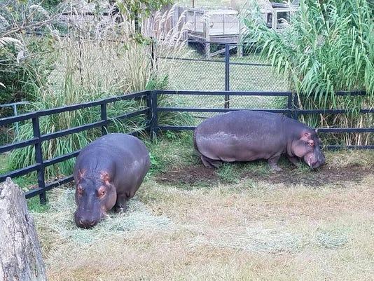636129238223589340-Hippo-Sisters.jpg