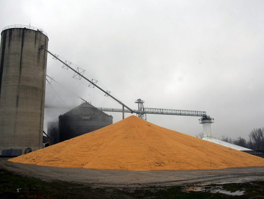 PILE OF HARVESTED CORN - KELLOGG