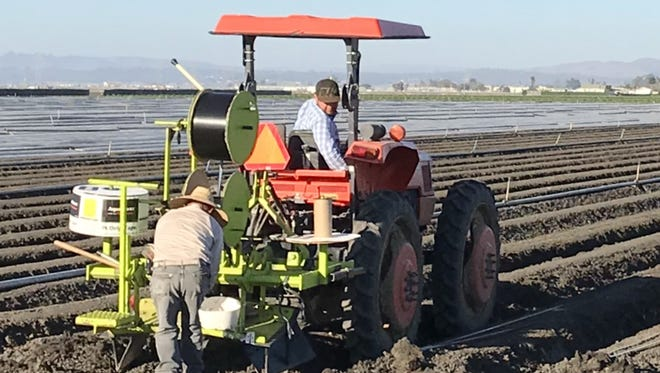 Farm workers use a tractor on a field outside Salinas. The American Civil Liberties Union says a new report on the pesticide chlorpyrifos' dangers needed to go much further in its analysis of the risks to farm laborers.