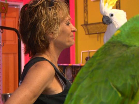 Irmo Bird Whisperer