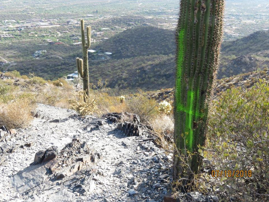 Saguaros Vandalized on Black Mountain Trail