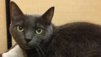 Cuddles is looking for a quiet and loving permanent home.