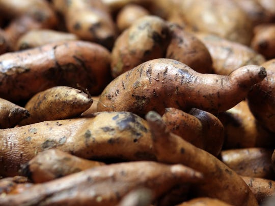Sweet potatoes deemed too unattractive to sell but