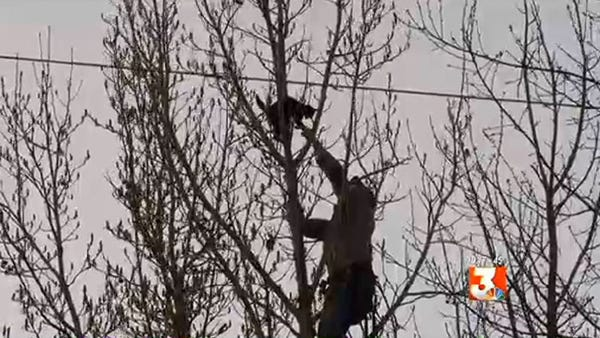 Video still of Binx the cat being rescued after five days stuck up a tree.