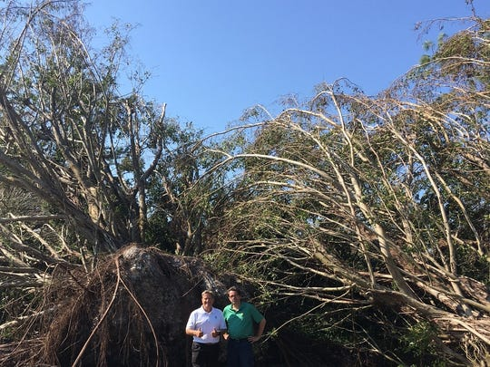 Quail Creek Country Club golf superintendent Kevin Leo (left) and general manager/COO Don Hunter pose in front of a downed tree on Oct. 9, 2017, after Hurricane Irma hit Naples on Sept. 10, 2017.