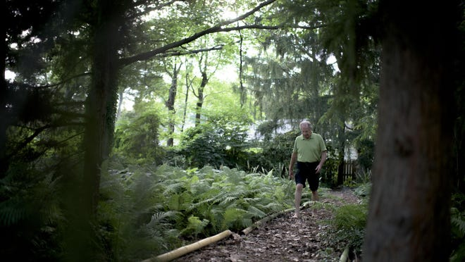Ric Venzie walks down a trail of ostrich fern and redwood trees at his home in Cherry Hill.