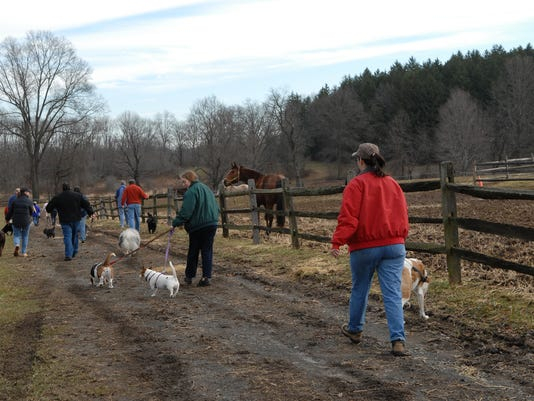 Bernards: Dog walks at Lord Stirling Stable PHOTO CAPTION