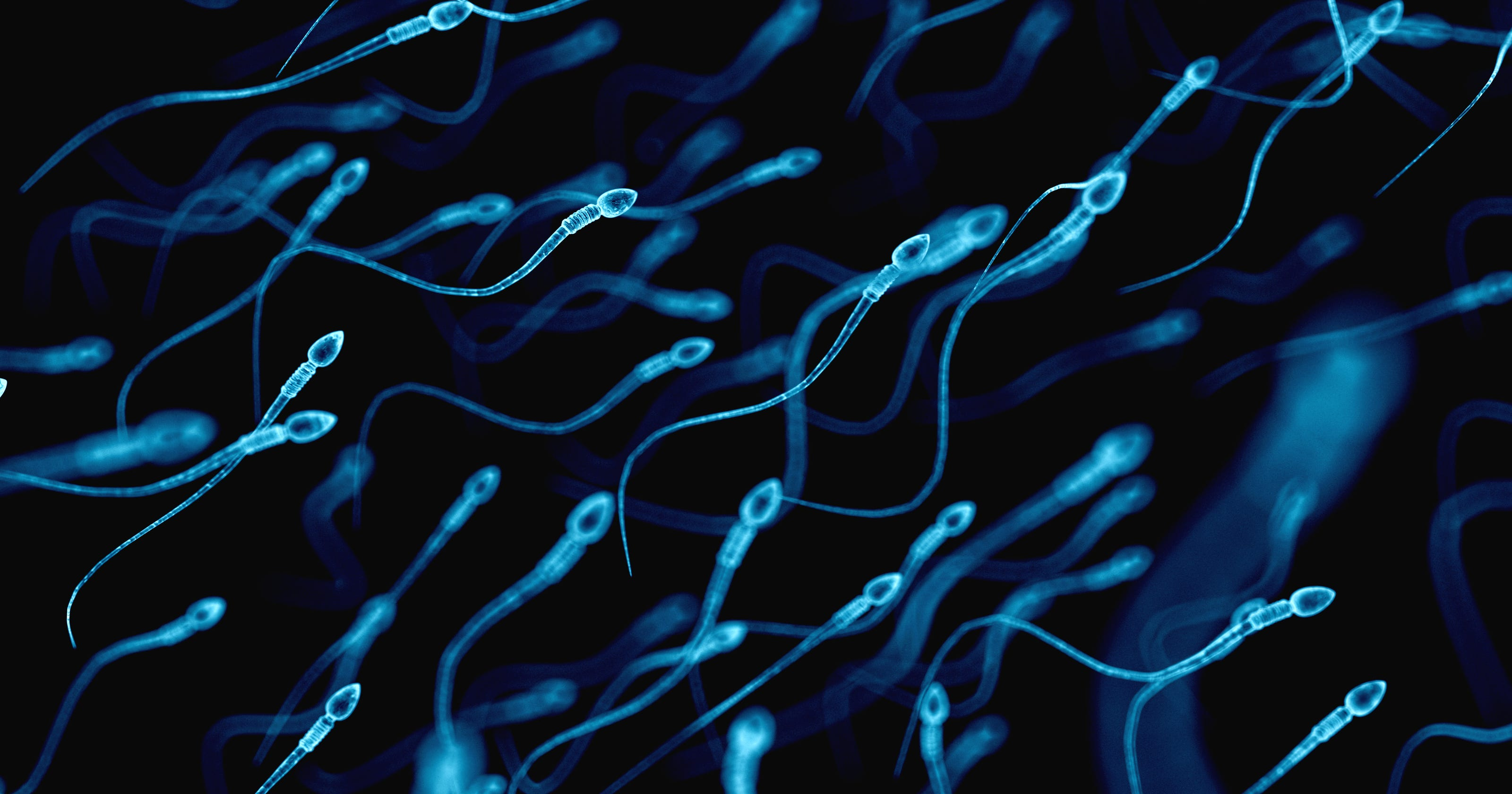 Add falling sperm counts to the list of things threatening human survival, epidemiologist warns - USA TODAY