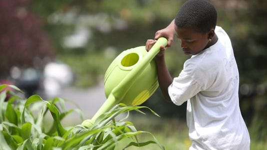 LAMONTE HOLMES: Thursday, June 19, 2014: NEWS. La'monte Holmes, 11, of Evanston, waters plants inside of the community garden at Xavier University on Thursday afternoon.