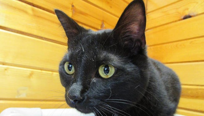 Storm is the Pet of the Week.