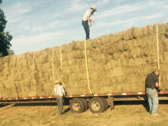 Erin Hills exchanges fescue from the course to the
