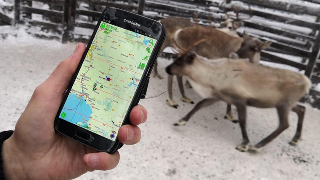 Reindeer herder Seppo Koivisto holds a smartphone, showing the mobile app used to locate reindeer in Finnish Lapland, in Rovaniemi, Finland, Thursday Dec. 13 2018.