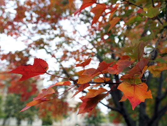 635811505019451841-IOW-1022-fall-at-the-UI-10
