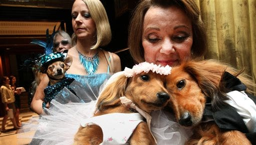 This file photo dachshunds dressed for the occasion, Dee Dee, foreground left, and her cousin Clifford, foreground right, are held by their owner Valerie Diker, as they and other dogs and people wait for the start of the most expensive wedding for pets in New York.   Doggy nuptials are gaining attention as Valentine's Day approaches and people are finding new and unique ways to pamper their pets.