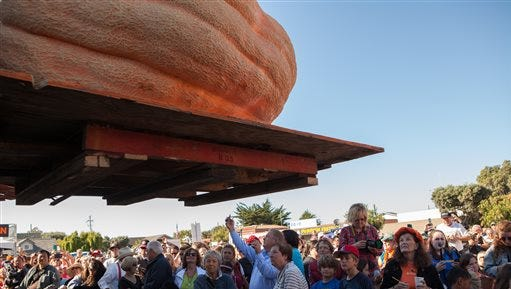 Entrants in the prettiest pumpkin category are lifted into the air for the crowd at the 41st Annual Safeway World Championship Pumpkin Weigh-Off  in Half Moon Bay, Calif., Monday, Oct. 13, 2014. Later in the day a 2,058 lb. pumpkin grown by John Hawkley took first place and set a new North American record. (AP Photo/Alex Washburn)