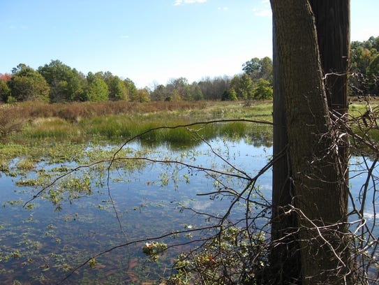 View from a birding spot at the Dismal Swamp in Edison.