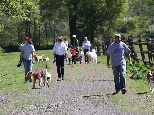 Dog walks on the trails at Lord Stirling Stable, 256