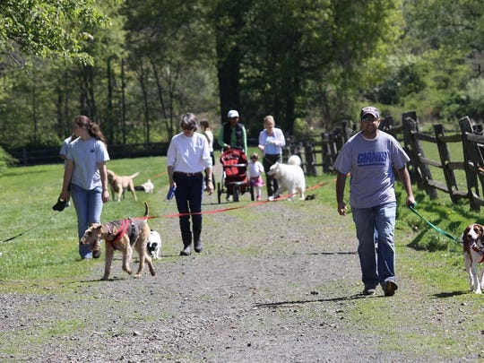 Dog walks on the trails at Lord Stirling Stable, 256 S. Maple Ave., Basking Ridge, take place every Saturday morning.